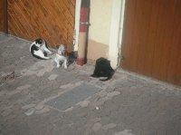 Katzen mit Sunny.jpg