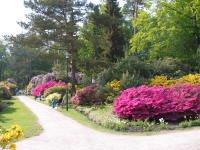 Rhododendronpark.jpg